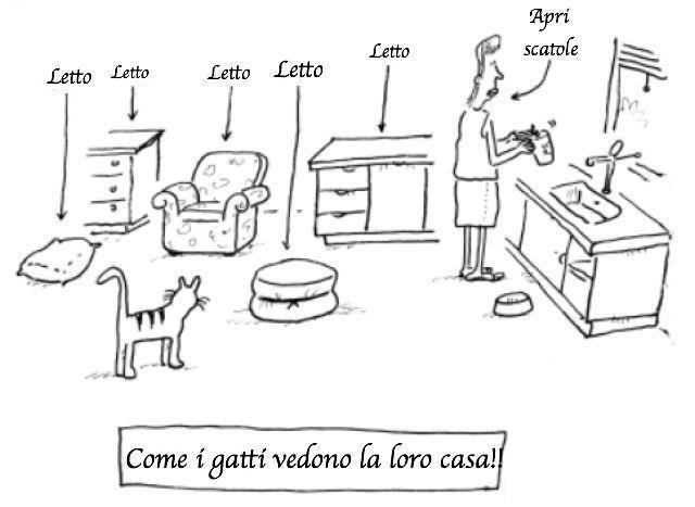 come i gatti vedono la loro casa (al link per l'immagine grande) dans gatti 180