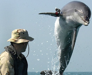 killer dolphin has gun