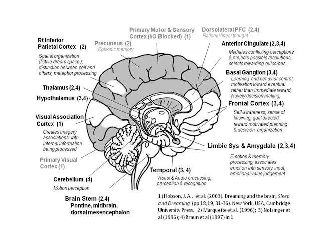 Brain Diagram8