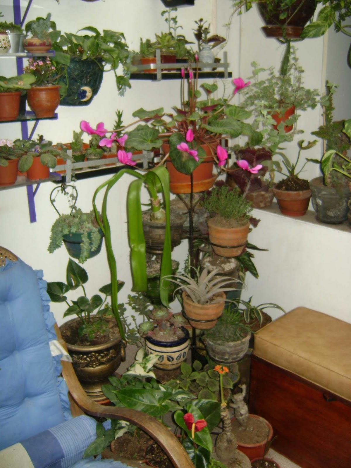 Jardines y macetas utilizacion de espacios peque os - Pequenos jardines zen ...