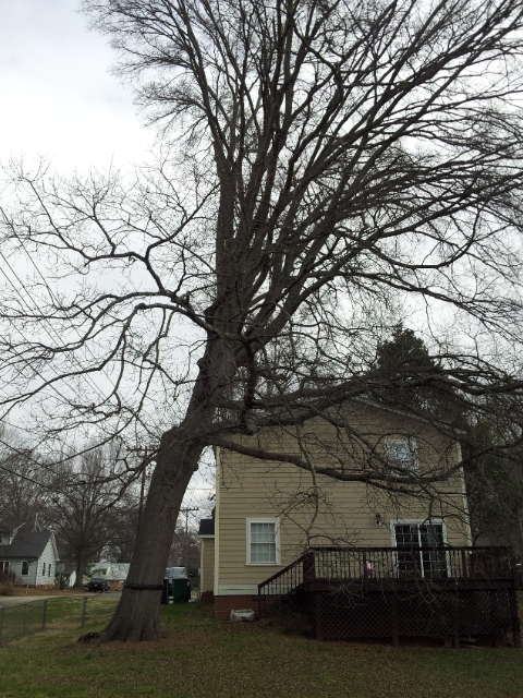 The Wandering Arborist Anatomy Of A Tree Failure