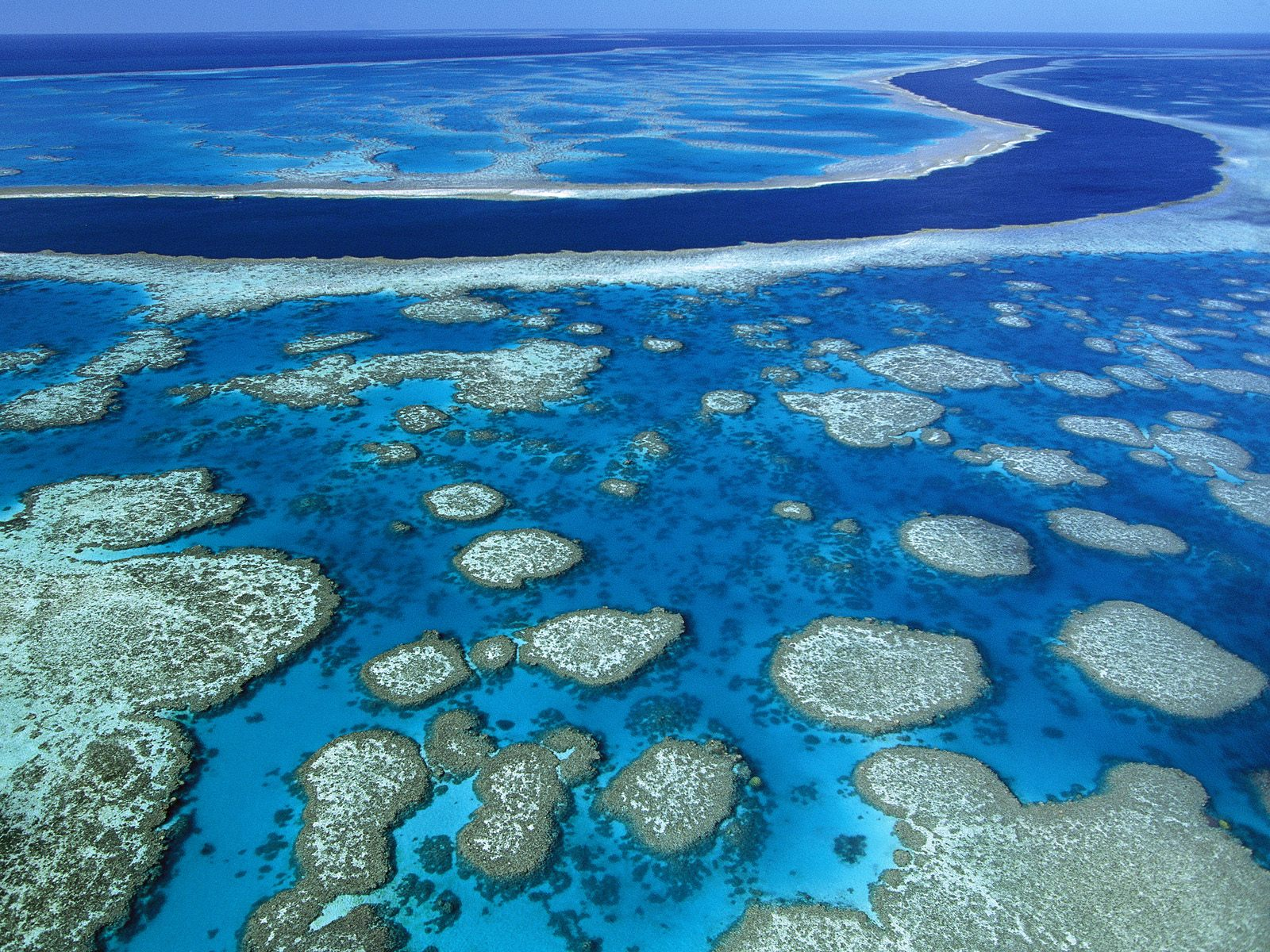 http://2.bp.blogspot.com/-ibEE5GbWFzA/T1-gLcmfPSI/AAAAAAAACmE/J9AyfkxD6aA/s1600/Great_Barrier_Reef_wallpaper_pictures_1.jpg