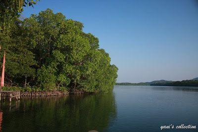 Hutan Mangrove (Dok. Mbak Aryani)