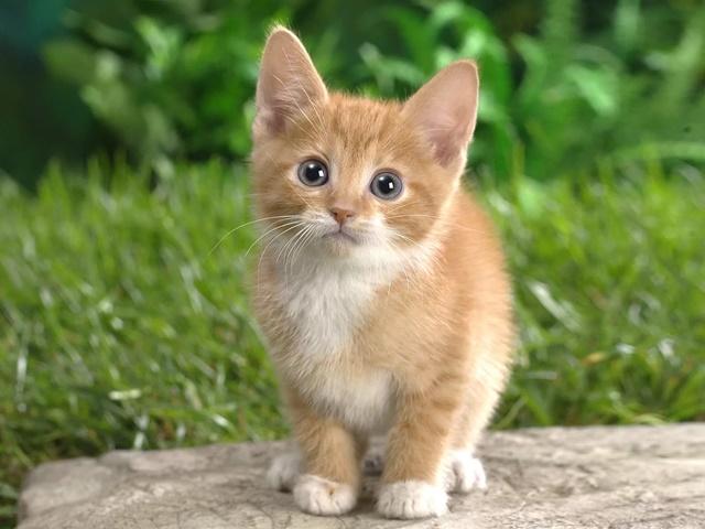 3 sebab mengapa kucing datang kepada kita ketika makan