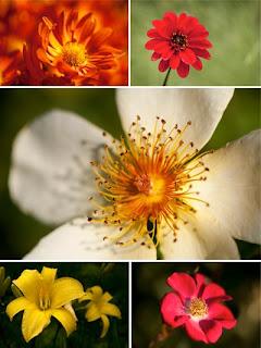 фото цветов картинки цветов
