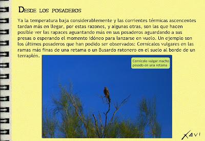 Cuadernos de campo. ZEPA Campiñas de Sevilla