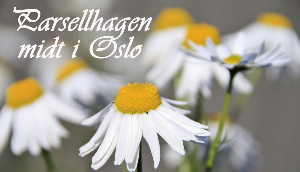 Parsellhagen midt i Oslo