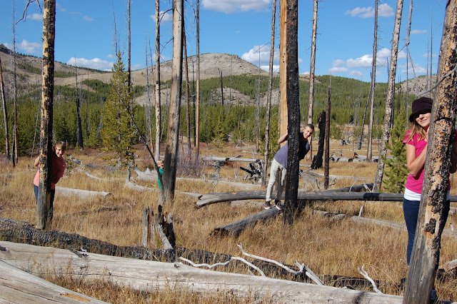 Kids behind burned out lodgepole pine trees in Yellowstone