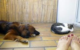 my companions ❤