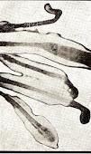TRACTAMENT CAIGUDA CABELL