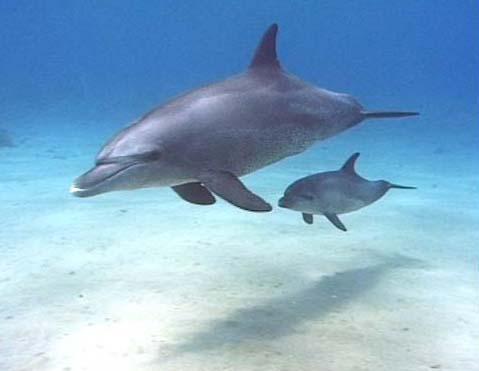 Baby dolphin - photo#19