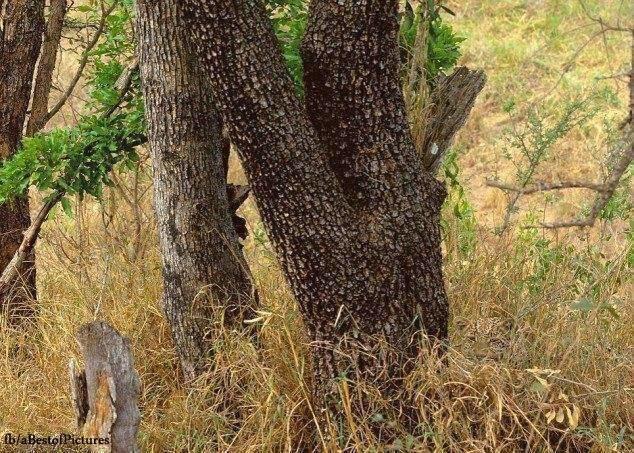 mind trick, animals, camouflage, tapandaola111