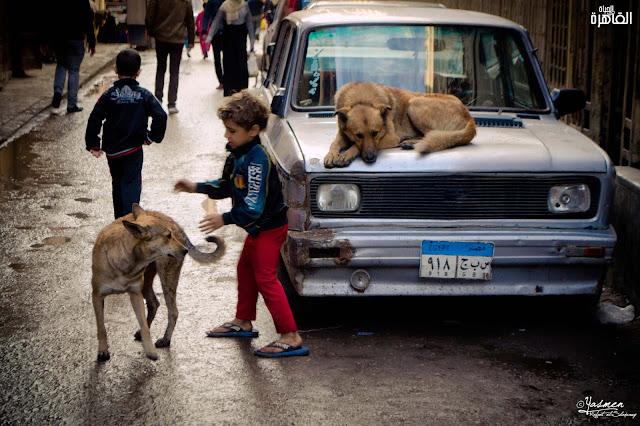 ثلاثة أطفال قد تلتقي بهم في شوارع القاهرة - الحياة في القاهرة