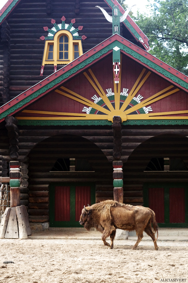 aliciasivert, alicia sivertsson, alicia sivert, berlin zoo, djurpark, djurhållning, instängda djur, djur i bur, cages, animal, animals, cage, bison, bisonoxe