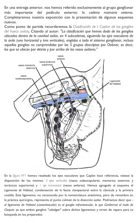Cuadernos de Anatomía Quirúrgica: Glándula mamaria: Pedículo externo ...