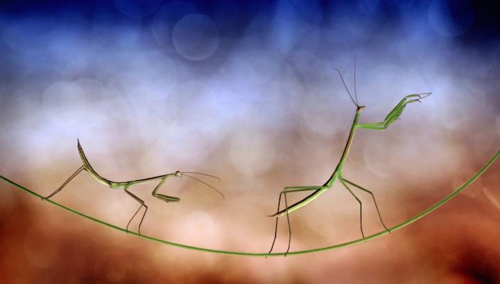 Exquisitas macro fotos revelan el mundo en miniatura de los insectos