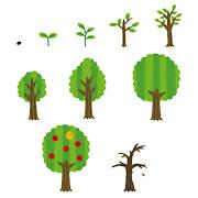 木の成長過程のイラスト