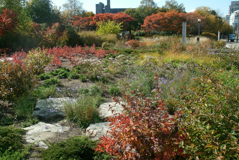 Autumn foliage at Spadina Quay Wetlands by Paul Jung Toronto organic ecological gardening services