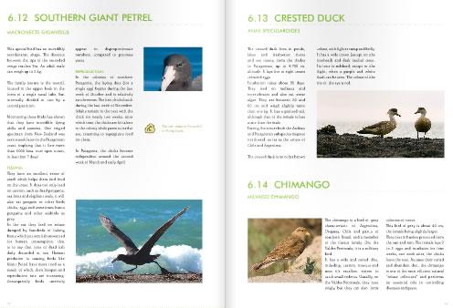 Peninsula Valdes Birds Guide