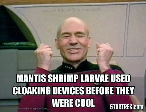 Some shrimp larvae us tricks of the light to make their eyes invisible. Evolution cannot explain this, it is the product of the Designer.