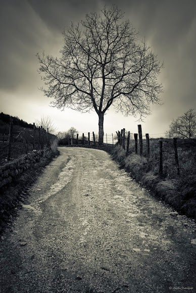 Best of tree black and white photography