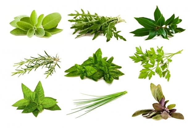 Por un mundo mejor los apson y las hermanas benitez en la - Plantas aromaticas interior ...