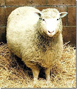Quince años del anuncio de la clonación de la oveja Dolly