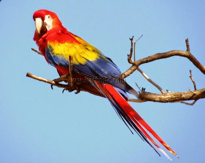 10 Jenis Burung Berbulu Cantik di Dunia