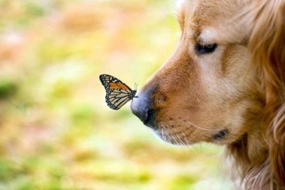 Scopri il mio blog su animali e natura