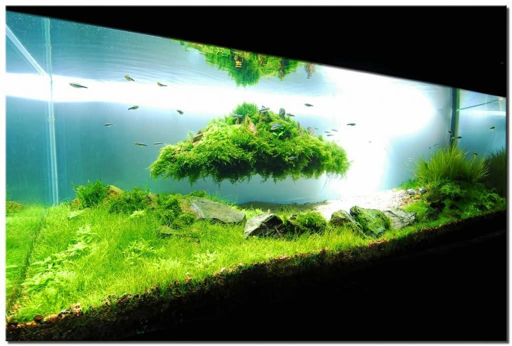 Pesona Aquascape Tanaman Dalam Air