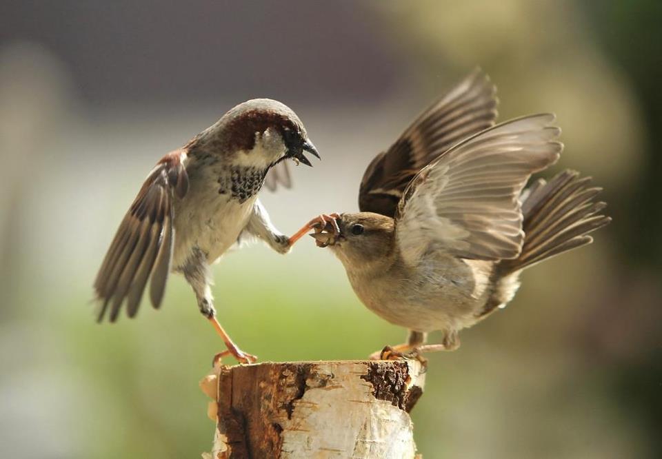 Amazing Fighting  Scene for Birds