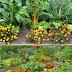 Vegetable Companion Planting Guide #vegetable_gardening