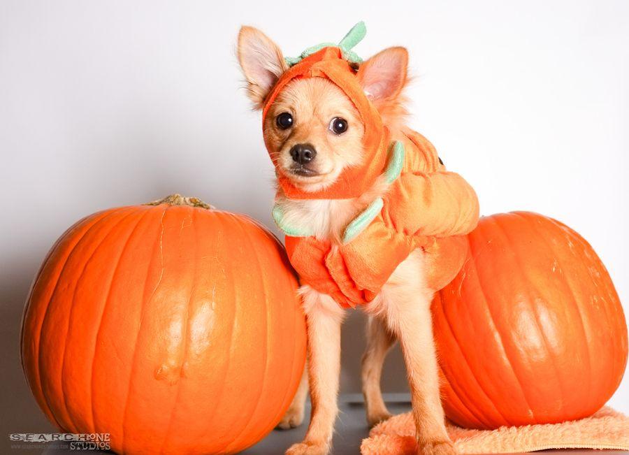 11. pumpkin boba by Paulo Devera
