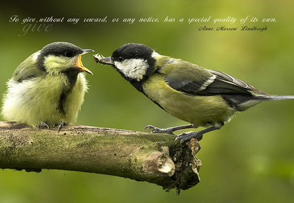 Quotes And Sayings About Birds Quotesgram