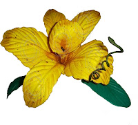 FLOR ORQUIDEA