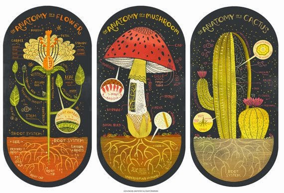 Current Obsession: Plant Anatomy by Rachel Notofsky