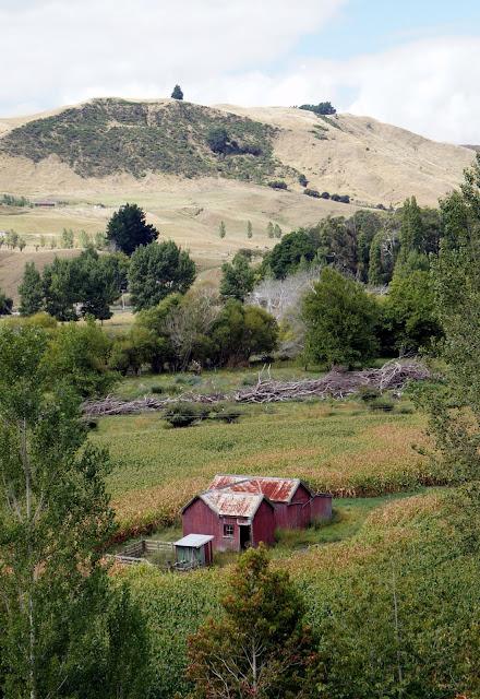 View from the winery - Te Kairanga - Martinborough