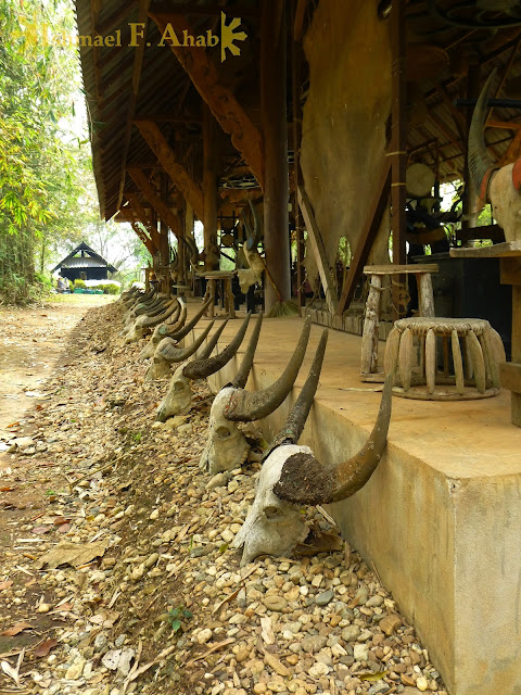 Carabao skulls at the Black House, Chiang Rai, Thailand