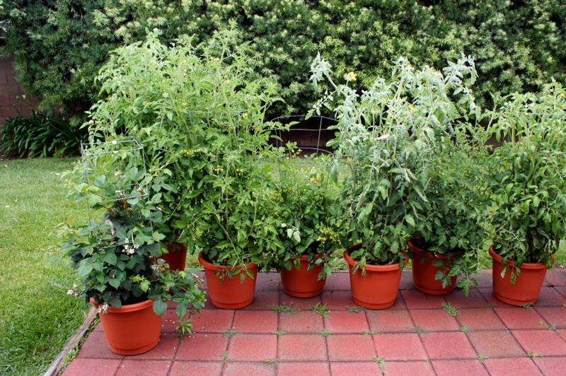 Natural and organic container gardening easy to grow for Easy to grow outdoor plants