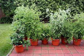 Natural and organic Container Gardening - Easy to grow plants in containers - Part Sun