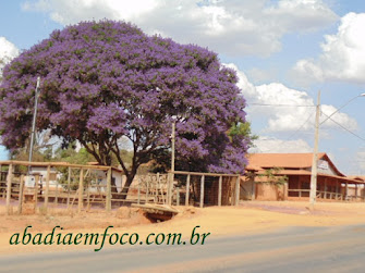 Linda árvore