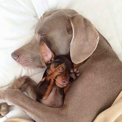 Dog's in love