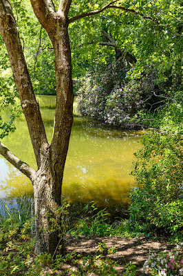 Bass Pond at Biltmore Gardens
