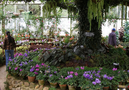 Asian paradise sri lanka hakgala botanical garden for Indoor garden designs in sri lanka