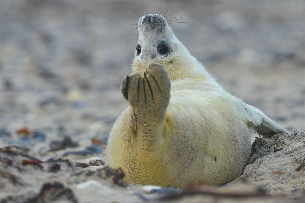 2. Yoga-Seal