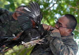 militar arrancándole la cabeza a un pollo