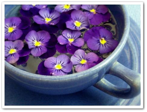 kopp med violeer