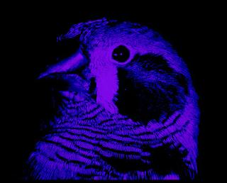 Luz ultravioleta flores