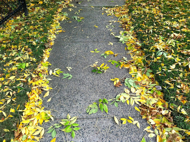 Yellow-Autumn-Leaves-with-Pretty-Concrete