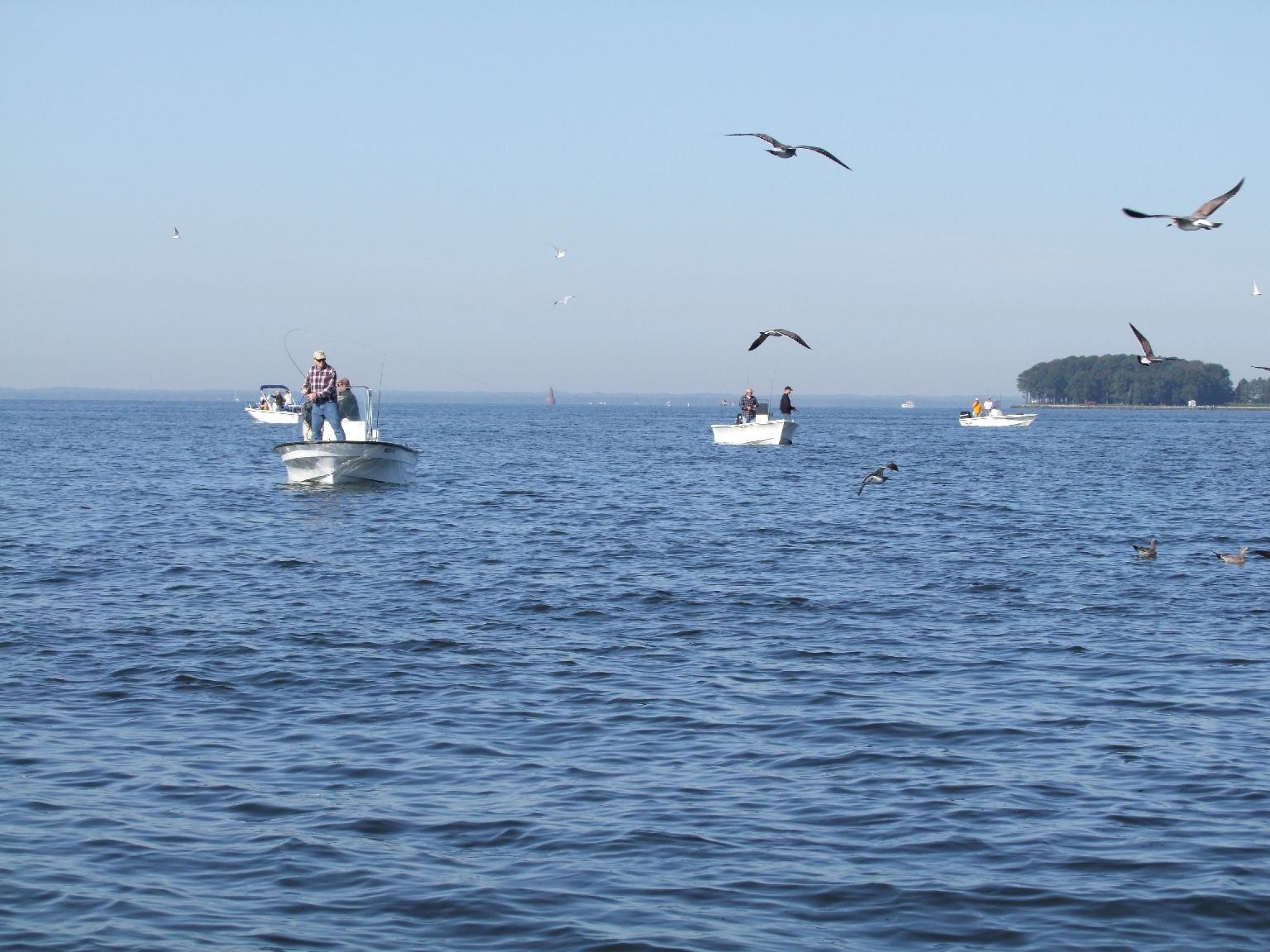 Beyond the silver rainbow october 2011 for Chesapeake bay fishing
